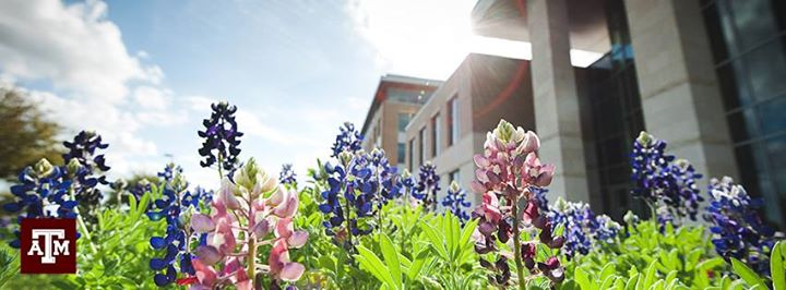 texas-a-and-m-university-small-business-department