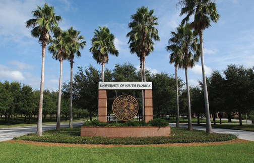university-of-south-florida-small-business-department